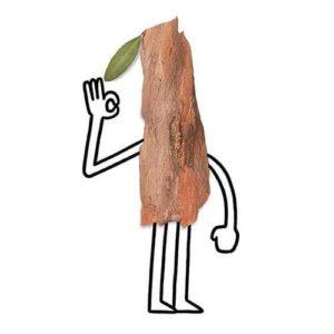 tree guy