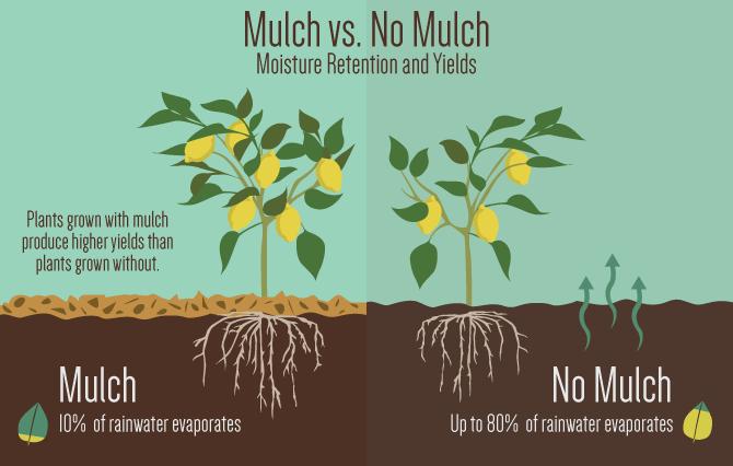 mulch diagram