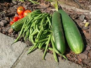vegetables-1989428__340