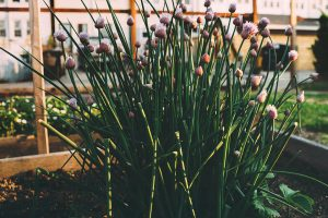 How to Plan Your Vegetable & Herb Garden
