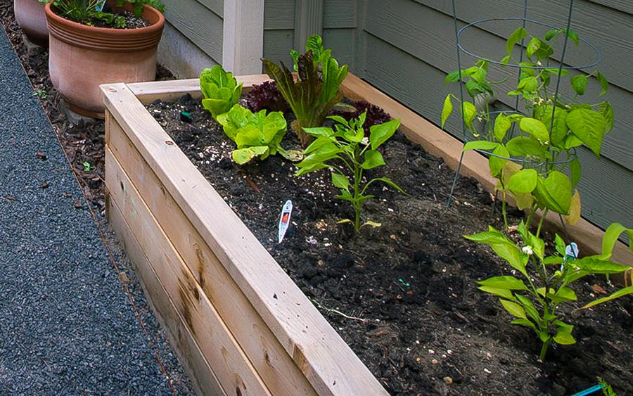 wood_planter_boxes