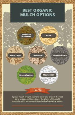 diagram of mulch choices